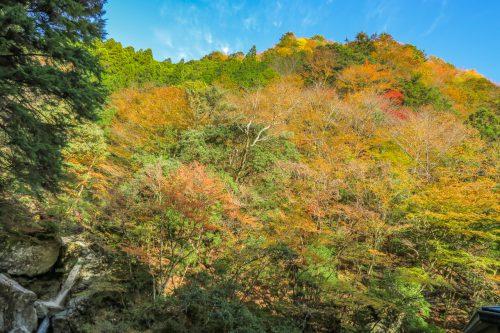 井光神社からの景色